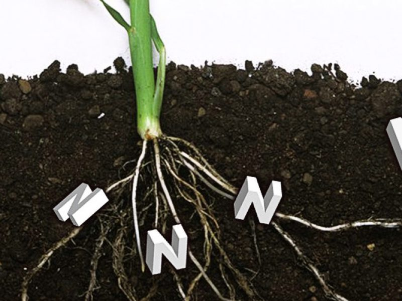Dow AgroSciences Nederland